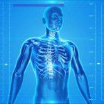 regeneration of lost limbs