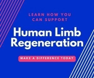 human limb regeneration research