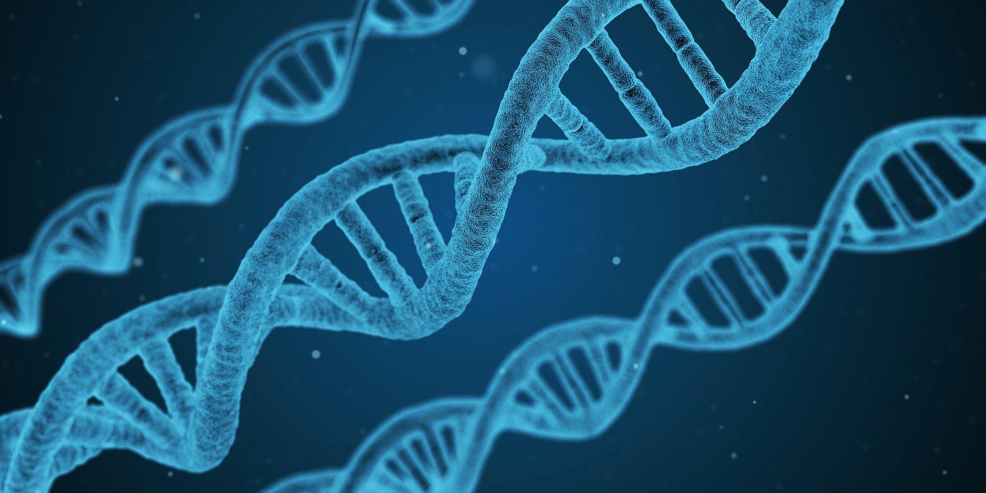 Human Limb Regrowth With Acorn Worm DNA - Human Limb Regeneration