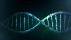 human limb regeneration bioreactor dna